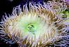 CRay-Fish-00002847