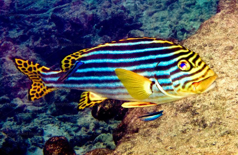 CRay-Fish-0098