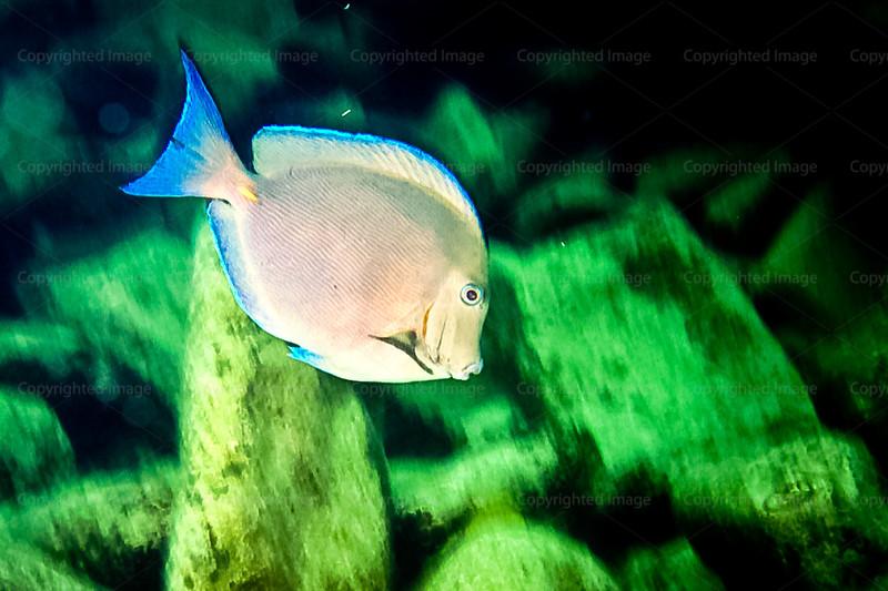 CRay-Fish--2