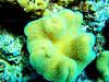 CRay-Fish-2638