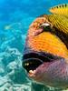 CRay-Fish-3-4