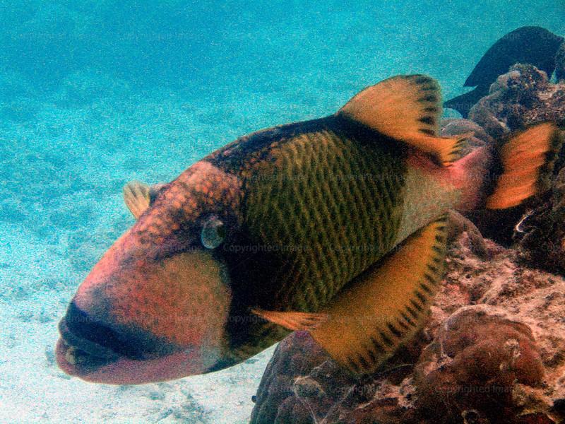 CRay-Fish-6-2