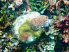 CRay-Fish-0395