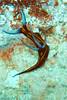 CRay-Fish--8