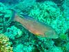 CRay-Fish-0185