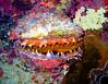 CRay-Fish-0161