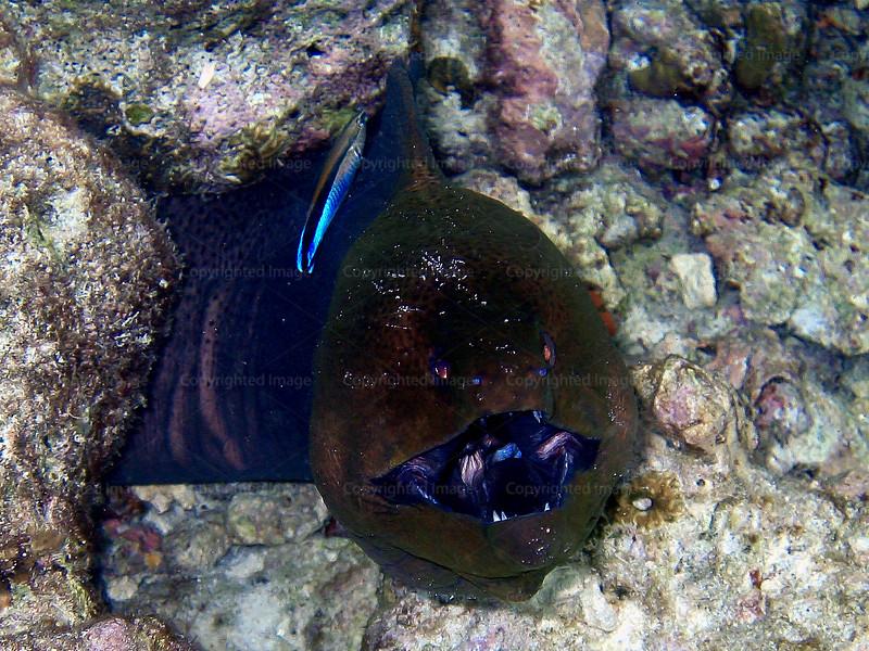 CRay-Fish--19
