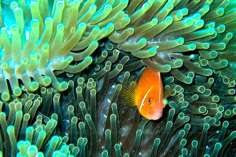 CRay-Fish--9