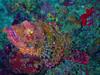 CRay-Fish-1401