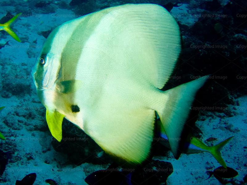 CRay-Fish-023