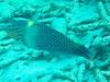CRay-Fish-3639