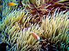 CRay-Fish-1295
