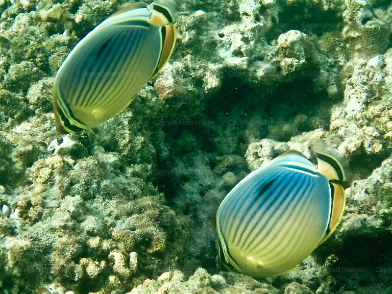 CRay-Fish-1569