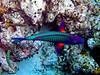 CRay-Fish-0070