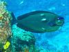 CRay-Fish-3007