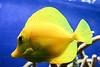 CRay-Fish-3673