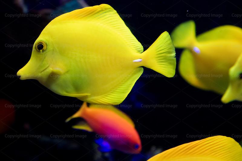 CRay-Fish-2754