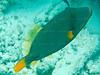 CRay-Fish-3638