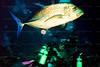 CRay-Fish-3-2