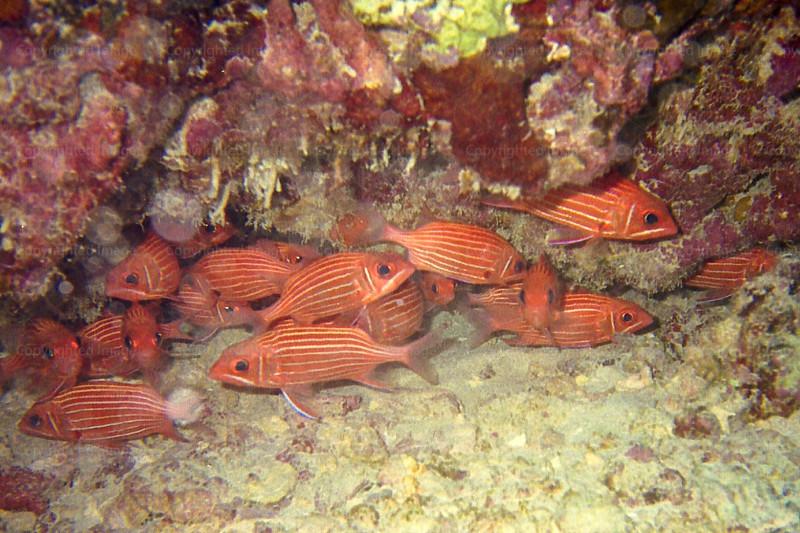 CRay-Fish-6