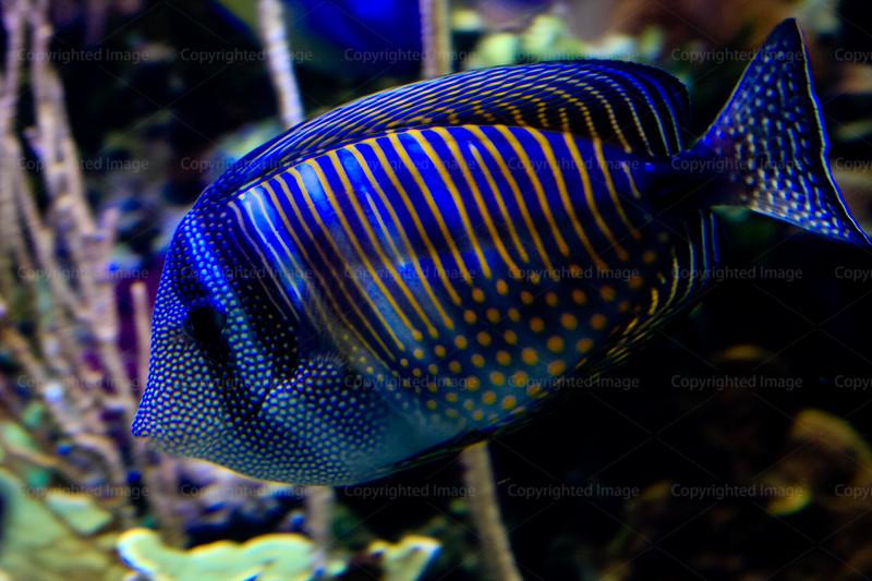 CRay-Fish-2735