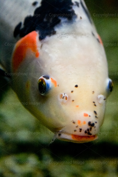 CRay-Fish-2520