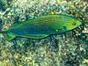 CRay-Fish-1448