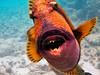 CRay-Fish-2-4