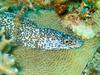 CRay-Fish-0736