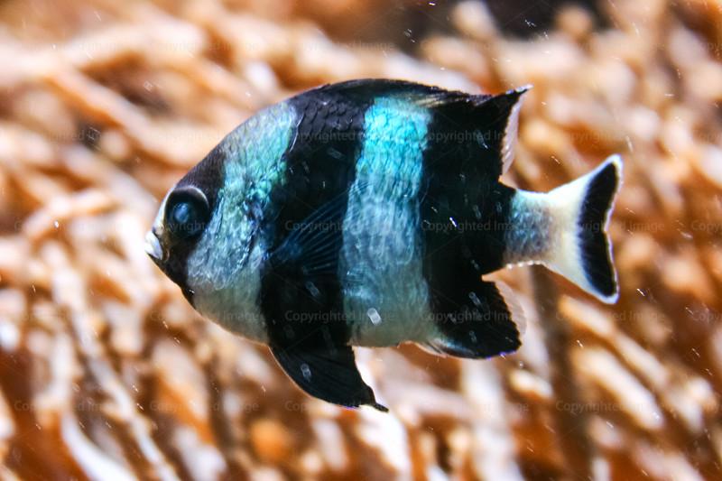 CRay-Fish-3648