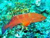 CRay-Fish-3151