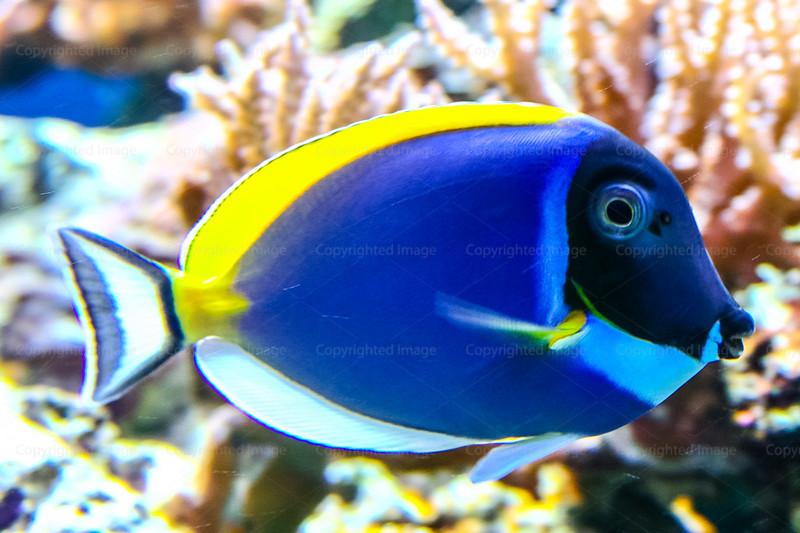 CRay-Fish-3674