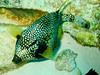 CRay-Fish-0697