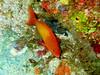 CRay-Fish-0328