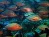CRay-Fish-0405