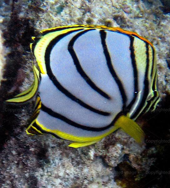 CRay-Fish-3653