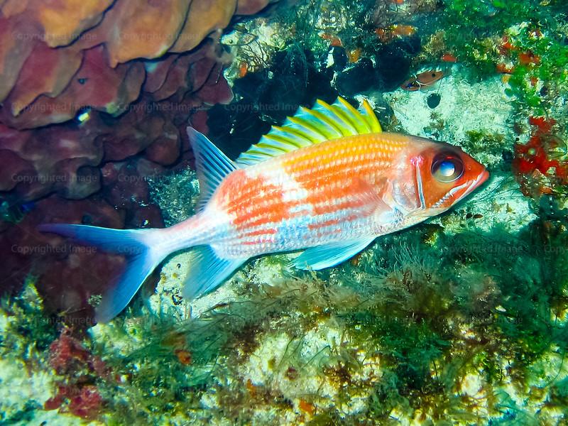 CRay-Fish-0690