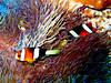 CRay-Fish-1292