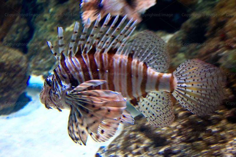 CRay-Fish-2705