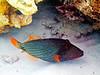 CRay-Fish-3624