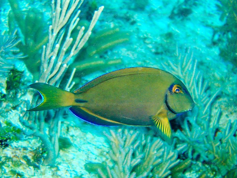 CRay-Fish-0714