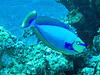 CRay-Fish-3004