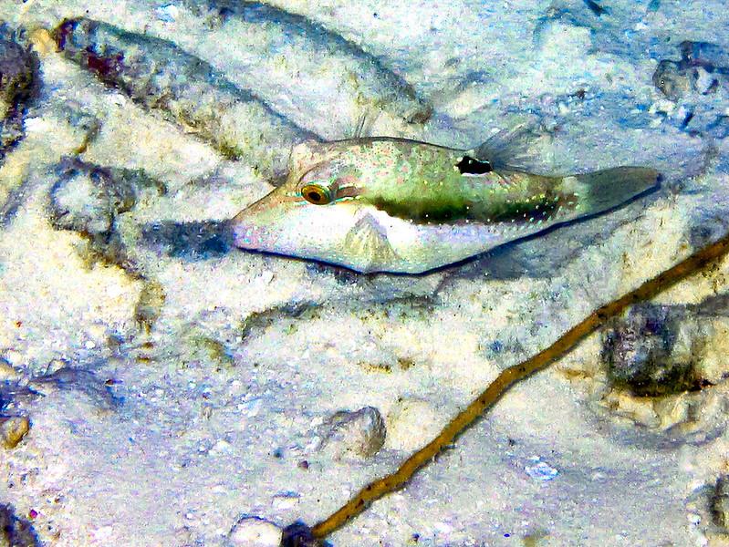 CRay-Fish-0017