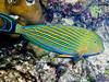CRay-Fish--16