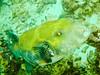 CRay-Fish-0417