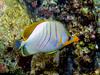 CRay-Fish-0447