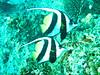CRay-Fish-3189