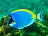 CRay-Fish-0044