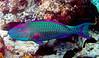 CRay-Fish-0068