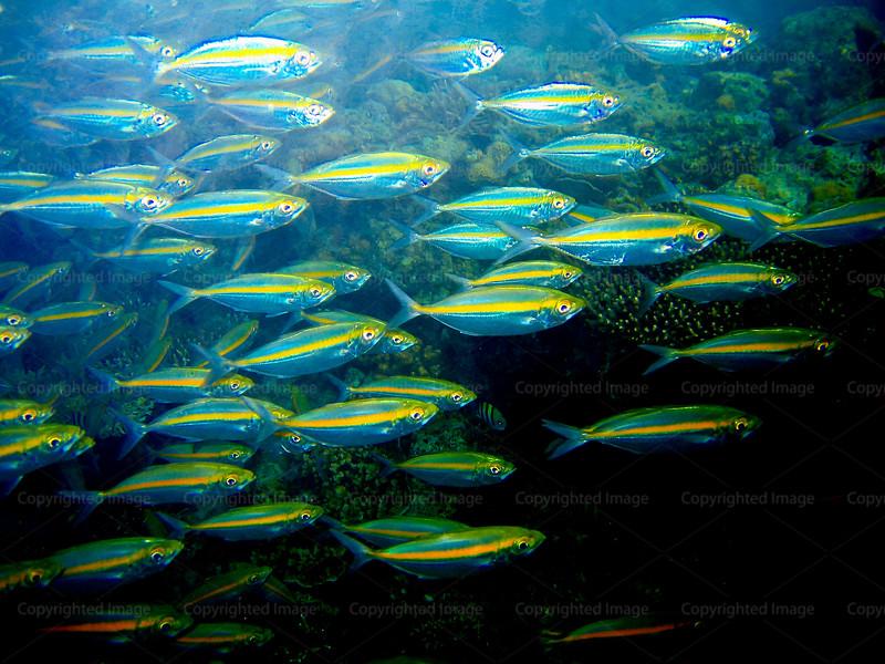 CRay-Fish-1189